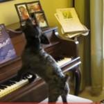 dog_singing